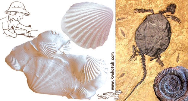 how to make fossils at home